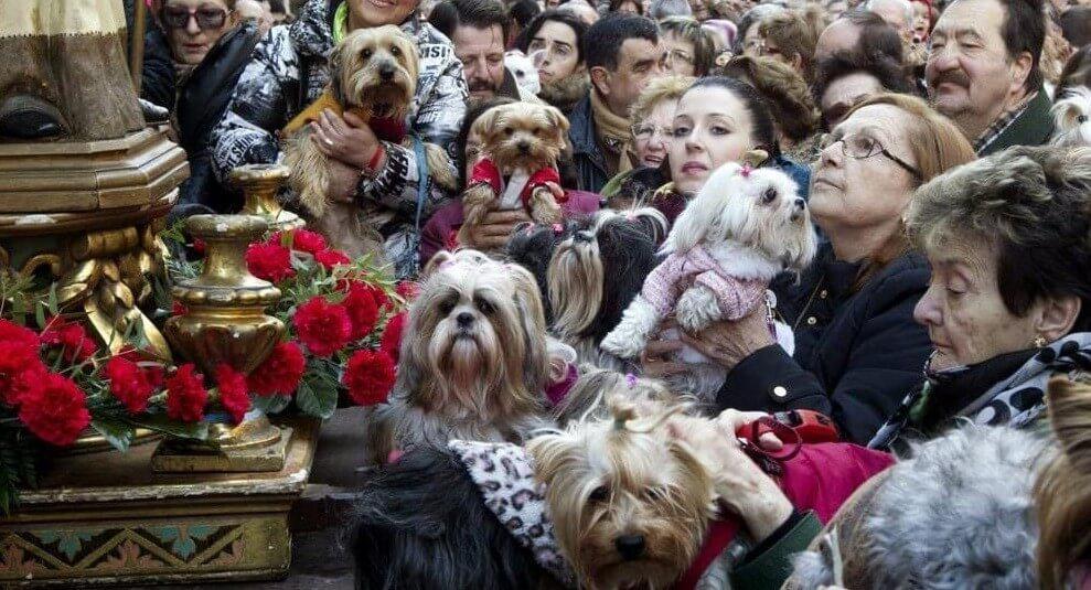 pessoas com os seus animais de estimaçao para serem benzidos na festa de san anton