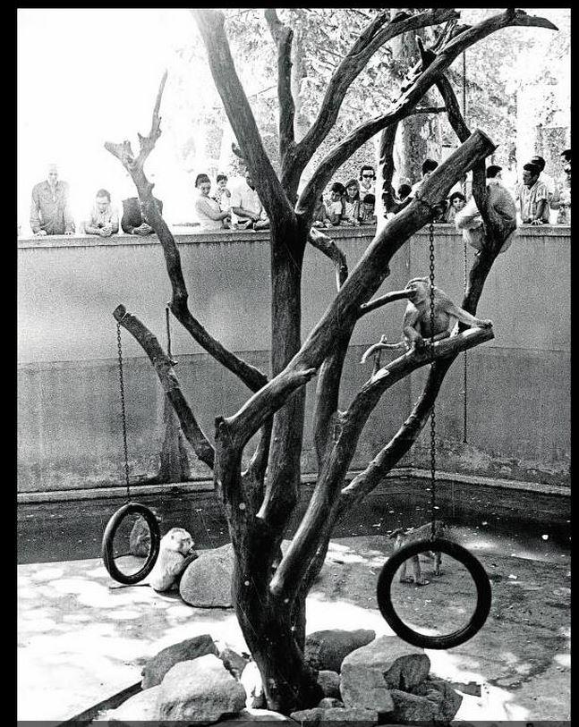 Fosso dos macacos em 1970