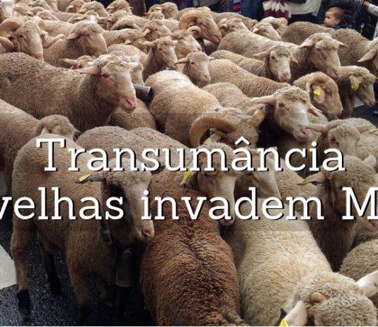 transumancia em madrid